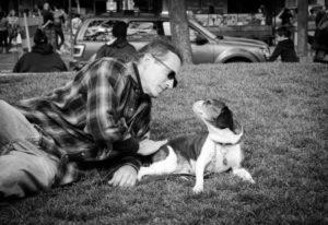 Royal Frenchel Adult Dog at a park BW