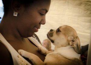 Royal Frenchel Portia Puppy KyungHyun Photography
