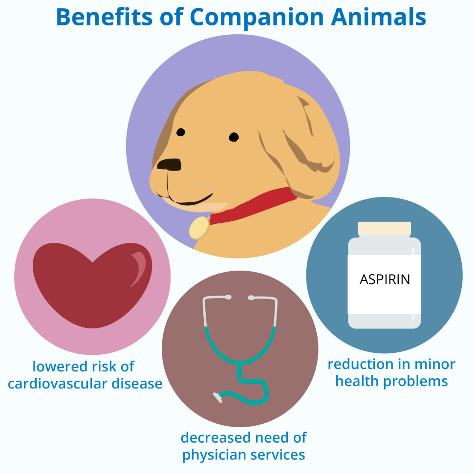 the benefits of having dogs as companions Taking care of a pet has a lot of benefits and involves a  pros and cons of owning a pet  people enjoy the company of animals and having a pet in your life.